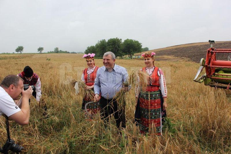 греков пшеница
